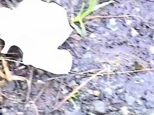 Jade Shuri - S11-01 - Captured Outside Pooping or Pissing